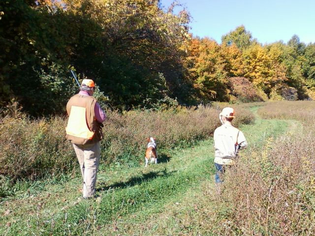 Pheasant hunt at Vernon National