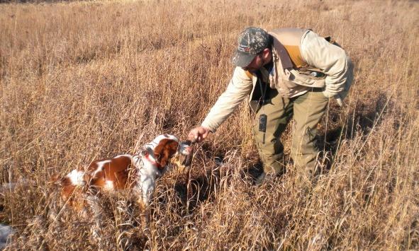Upland hunting at Vernon National Shooting Preserve